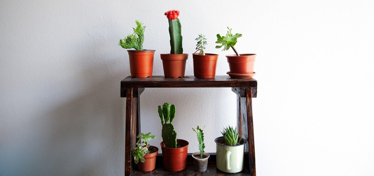 Potted cactus – natural minimalism in your interior