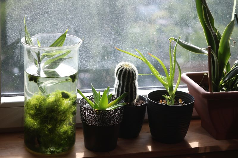 House plants – what should you know about them?