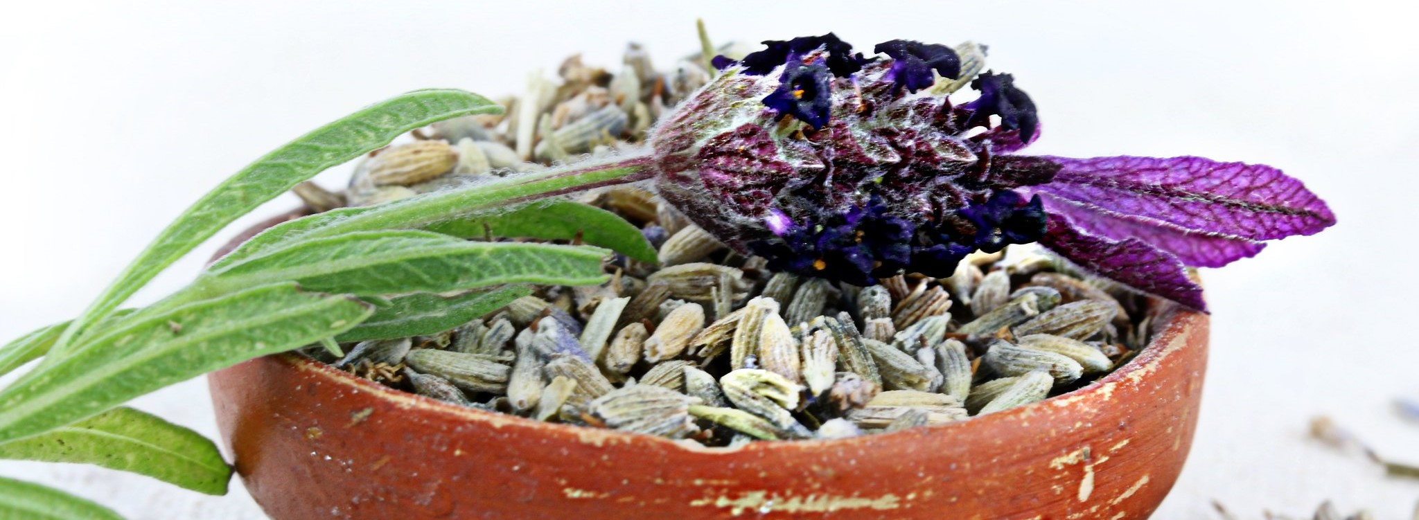 Lavender in a pot – what should you know about it?