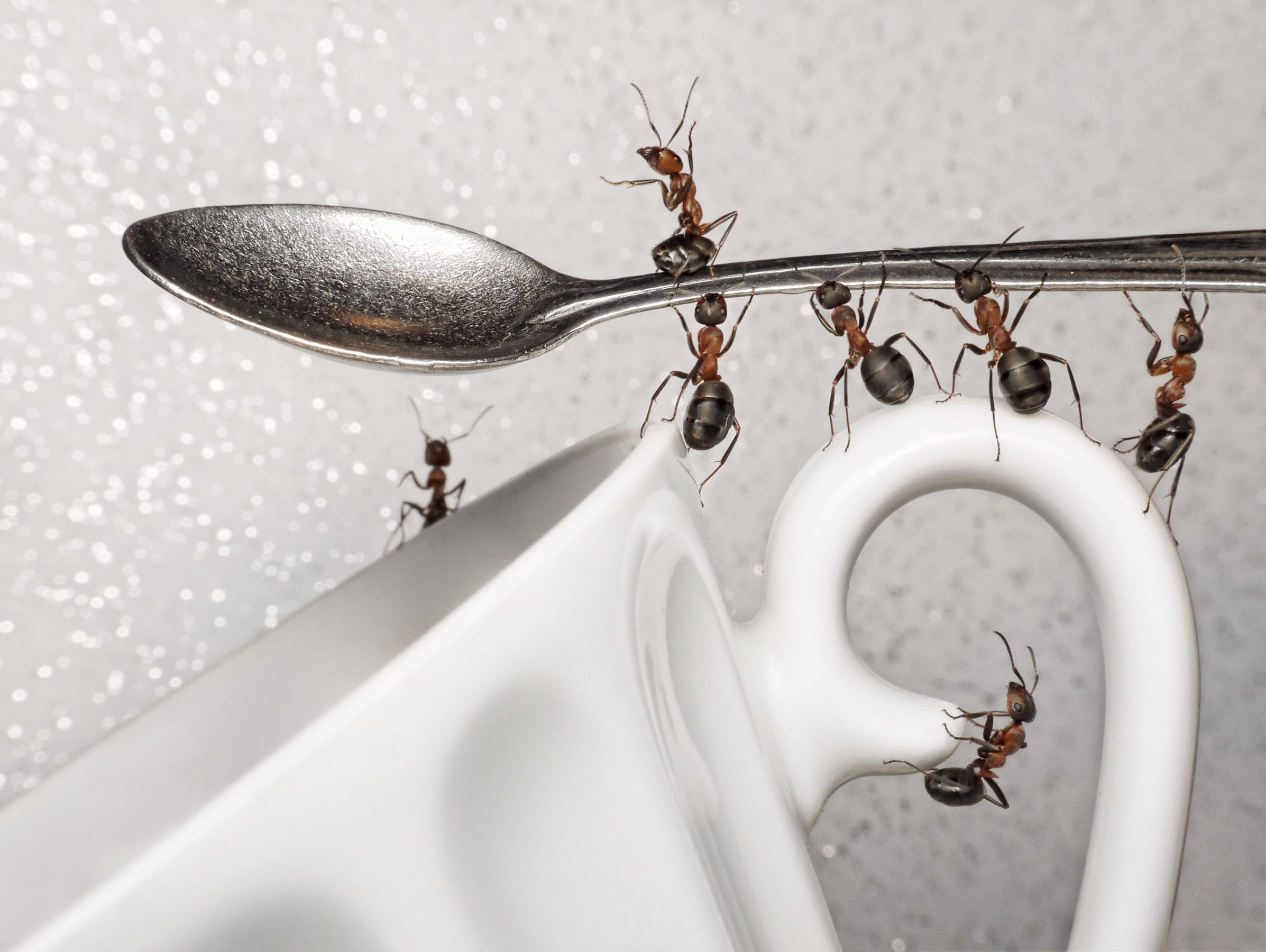 How To Get Rid of Ants In House? 4 Easy Ways To Kill Ants