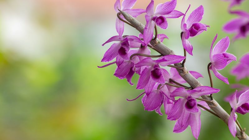 Are there any orchid flower types that are easy to grow?