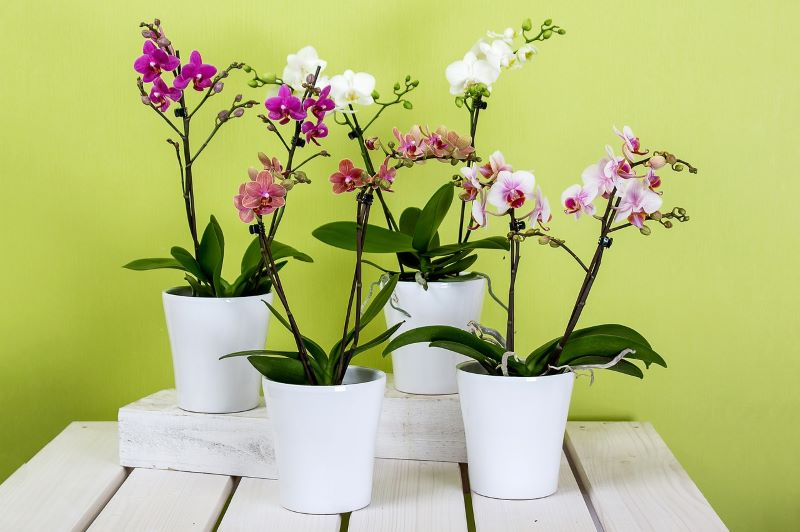 Orchids... potted plants that delight everyone