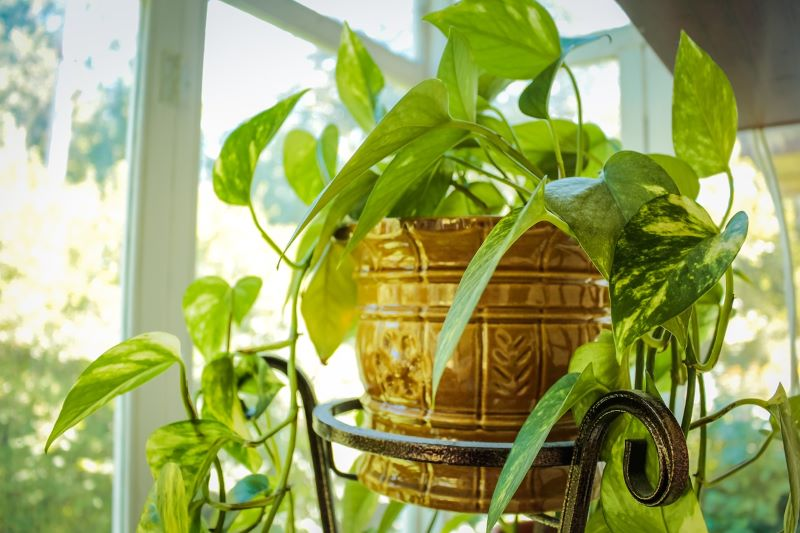 How to take care of house plants?
