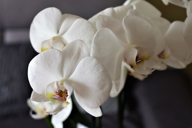How to care for orchids at home?