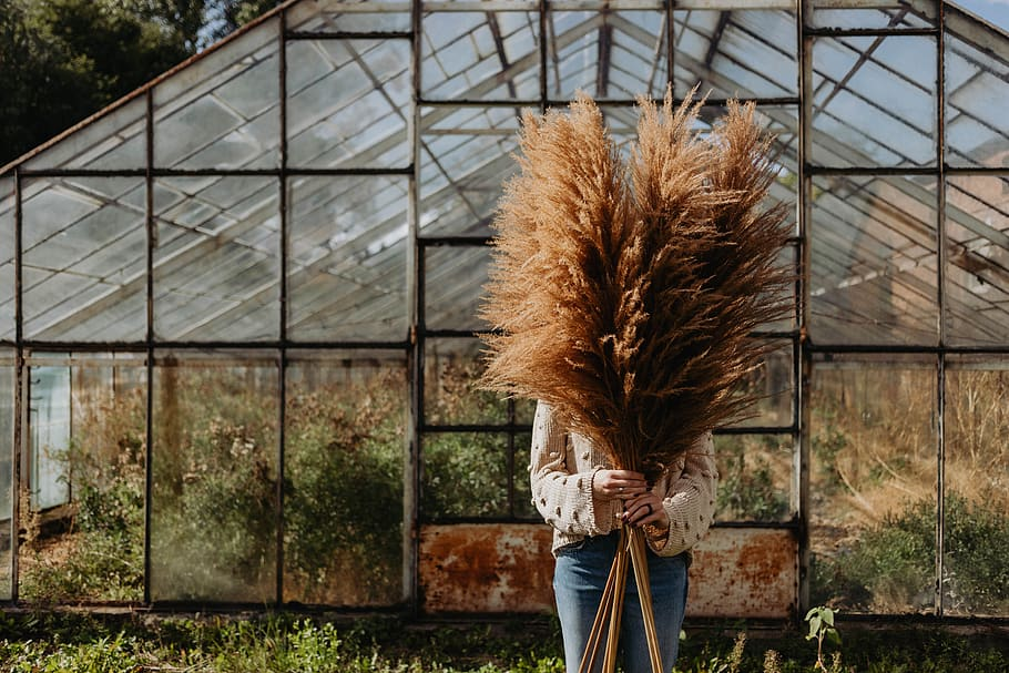 How to use pampas grass at home?