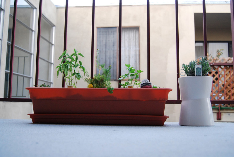 Vegetables and herbs - a fantastic small balcony idea